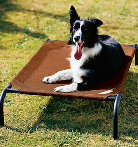 Coolaroo Pet Beds: Medium